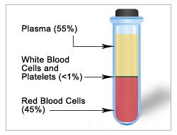 blood-components-vile