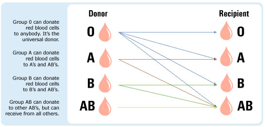 blood-types (1)