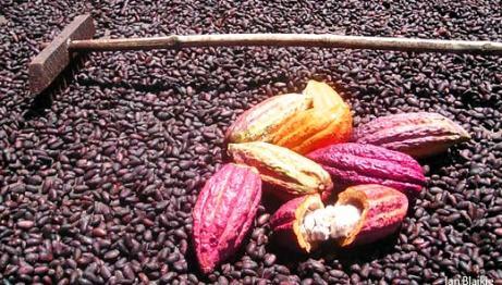 grenada_cocoa